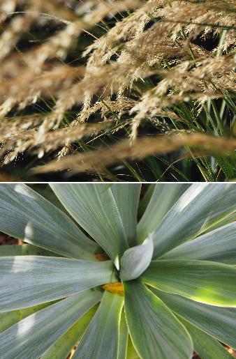 legoff-plante
