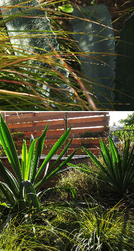legoff-plantes