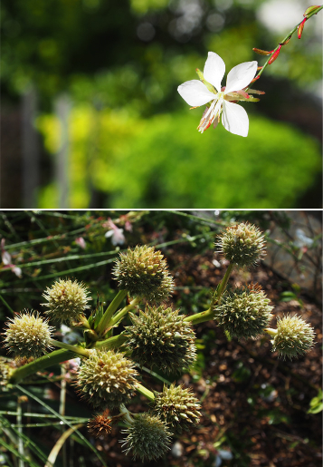 fleurs-dautomne